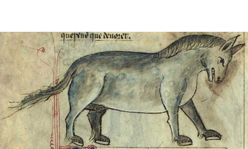 Koń, jaki jest, każdy widzi?